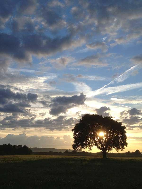 Baum und Wolkenstimmung bei Sonnenuntergang